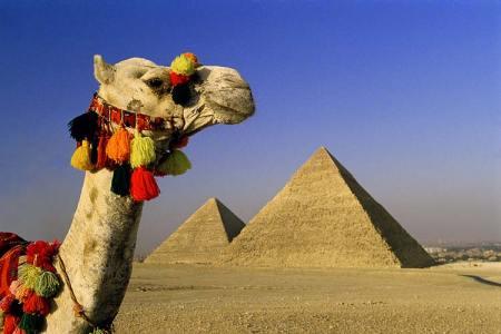 egypt_great_pyramid_camel